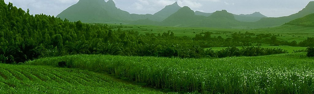 Ethanol Producing Sugar Cane Fields - Renewable Energy Engineering & Design